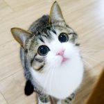 猫のすずめ